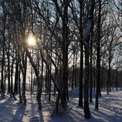 Sneeuw op Balloerveld