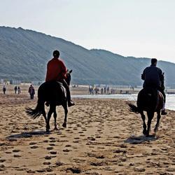 Paarden aan zee