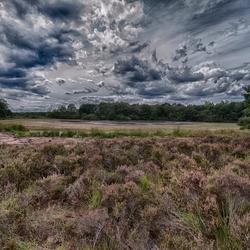 Natuurgebied de Pannenhoef