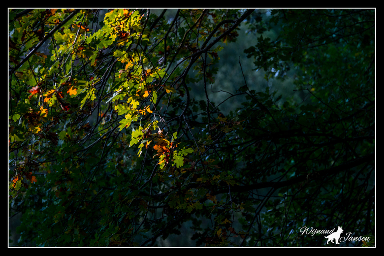 Searching for light and catching light in the forest -