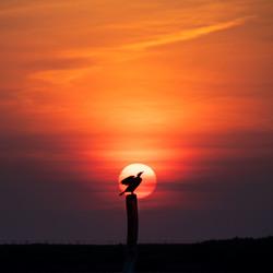 Vogel in de zon