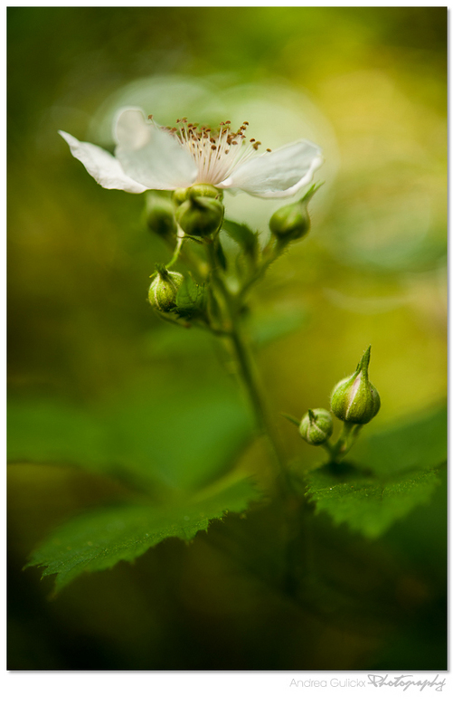 Wildberries Flower