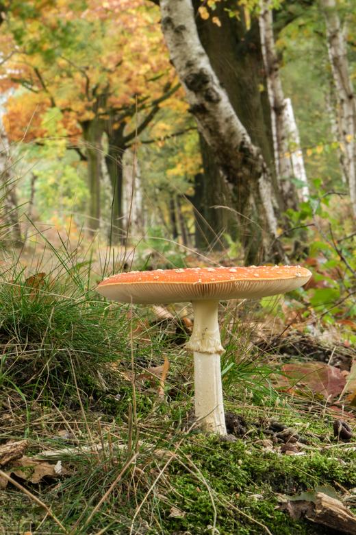 Herfstkleuren. - Mooie herfstkleuren in bos van Brabantse Wal, nabij Bergen op Zoom.