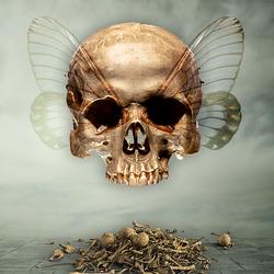 . . . Dia de los Muertos . . .