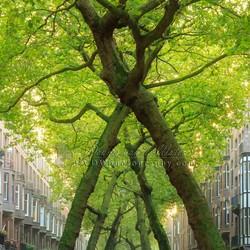 Tree X Amsterdam