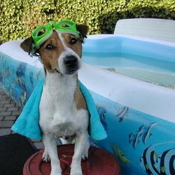 Milo aan het zwembad