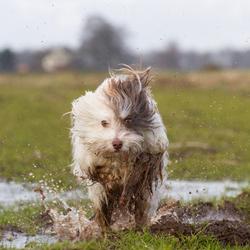 Toby 'splash'