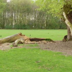 De Heinis, Mooi Natuurgebied in 's-Hertogenbosch