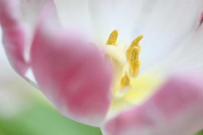 VOORJAAR!? - Het begin, voorjaar in een vaas. Bosje tulpen gekocht en aan de slag. Kan niet wachten op het echte voorjaar.