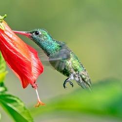 Op zoek naar Nectar (2)