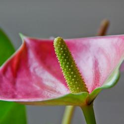 kleurrijke plant
