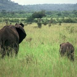 Olifant met haar jong