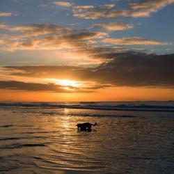 zee hond