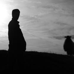 Human vs. Sheep