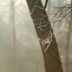 Misty web.