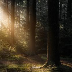 Magisch light