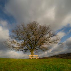 Eenzame boom op de heide