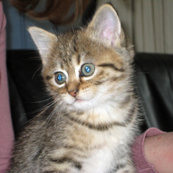 De nieuwe kitten