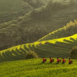5 dames in de rijstvelden