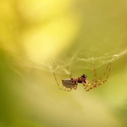 Cobweb Creature