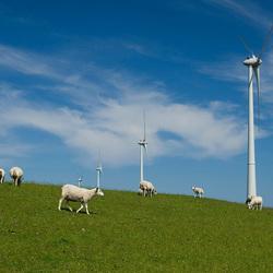 Sheep Energy