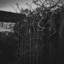 Omgeving fotografie Leusden