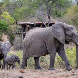 Olifanten bij Umlani Bush Camp