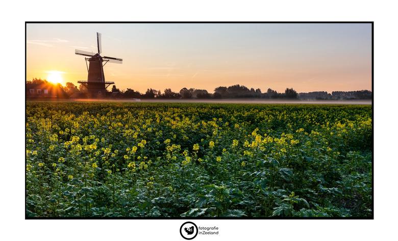 Sunrise Windmill -