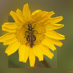 Gele bloem met...