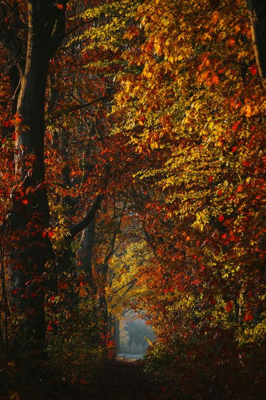 My Autumn Morning. -