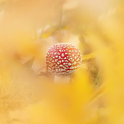 Autumn golden frame
