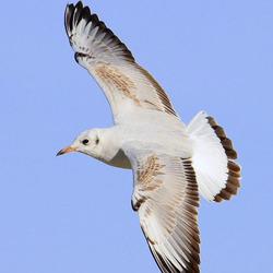 Vogelvlucht