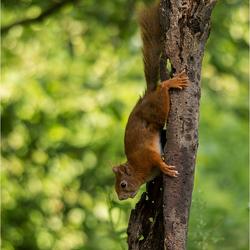 Squirrel......Get down!!!!