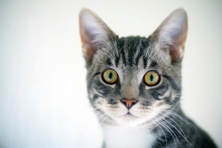 Grote ogen - Harrie onze kater