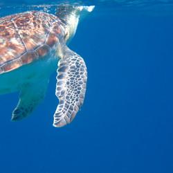 FV turtle below.JPG