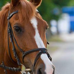 onze pony