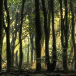 Zonnestralen door het beukenbos
