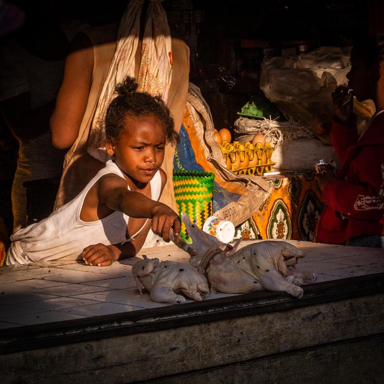 Vliegensvlug - Op fotoreis in Madagascar. Het meisje zo gefocust op het beschermen van de kip tegen vliegen.