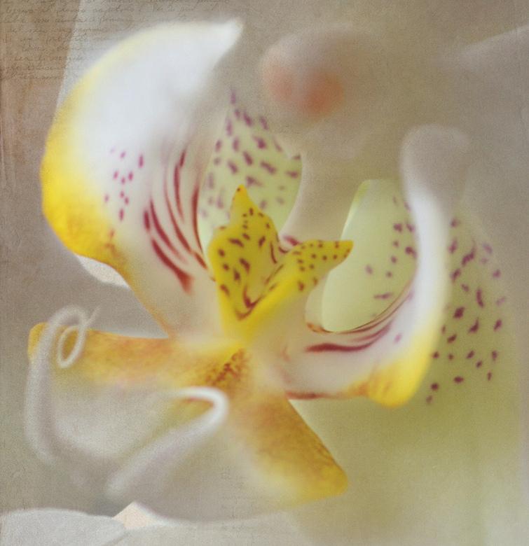 Orchidee  - Les 3 van de fotocursus, photoshop, werken met lagen. Dit is de thuisopdracht voor a.s. donderdag: foto optimaliseren en evt. met lagen op