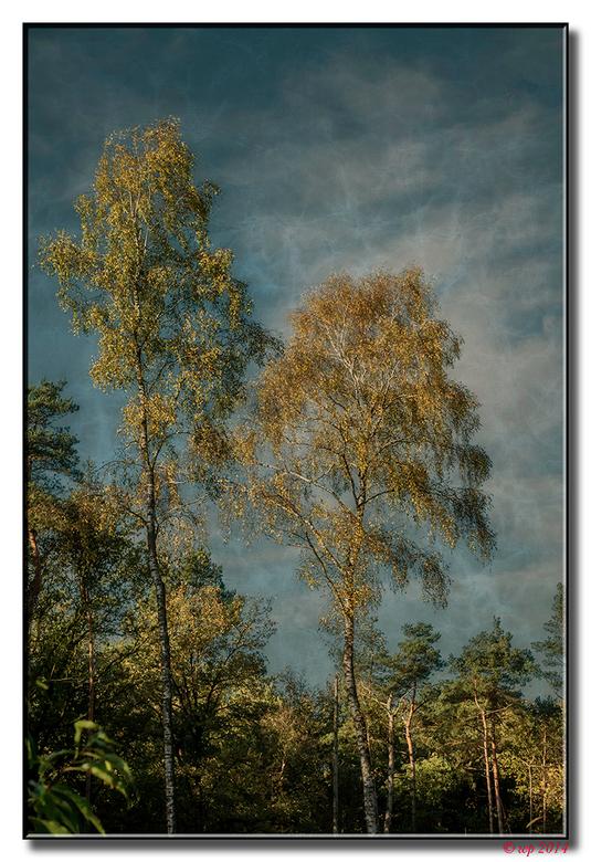 Berken - Van een tijdje geleden op de Hoge Veluwe. Foto is bewerkt, voorzien van een texture en fotofilter.