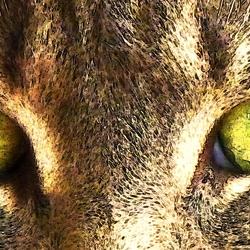 De ogen van Poekeltje...