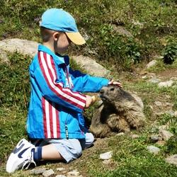 alpenmarmot voeren