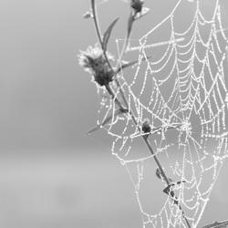 Vochtig_Spinnenweb
