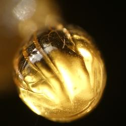 Gouden parel