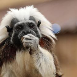 nog meer schattige aapjes