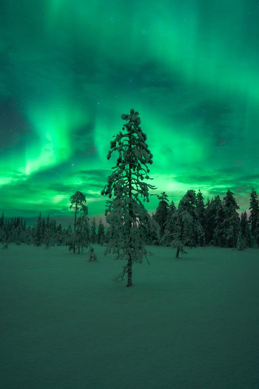 Noorderlicht in Lapland - Eén van de resultaten van een prachtige reis naar Fins Lapland vorige week, waarbij het Noorderlicht natuurlijk niet mag/kan