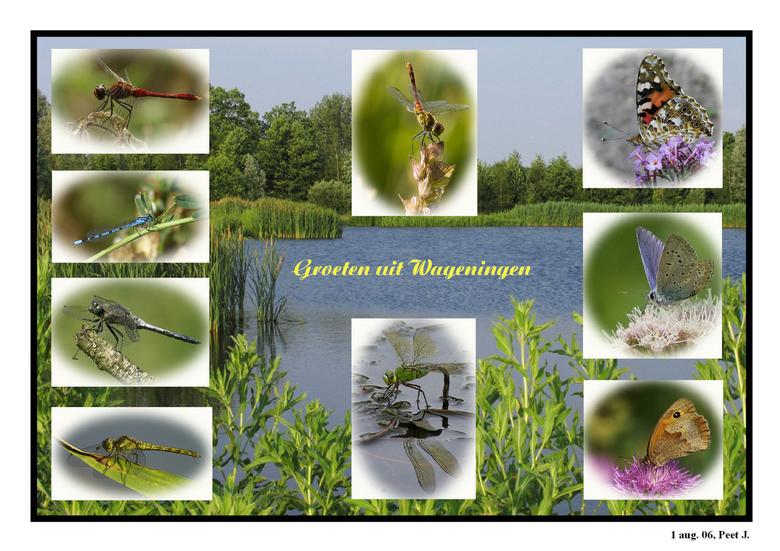 M,n stekkie - Dit zijn een aantal insectenfoto's die ik bij deze vijver heb gefotografeerd.