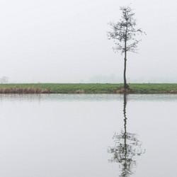 De eenzame boom..