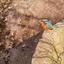 Ijsvogel tijdens ijzige kou,zo dicht bij mijn warme huis
