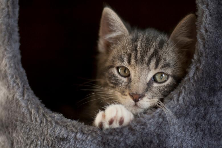 """Harrie - Harrie, onze nieuwe kitten <img  src=""""/images/smileys/smile.png""""/>"""